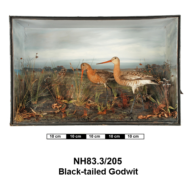 General view of object no. NH.83.3/205.