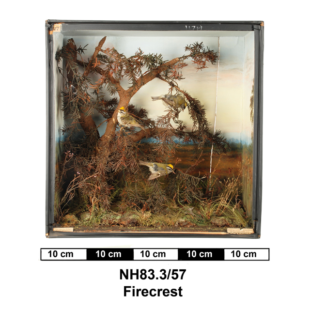 General view of object no. NH.83.3/57.