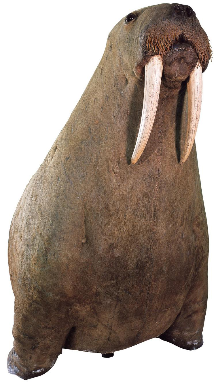Frontal view of object no. NH.H.44.