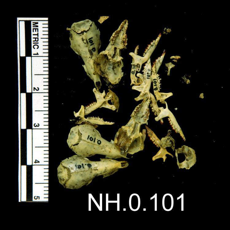 General view of object no. NH.0.101.