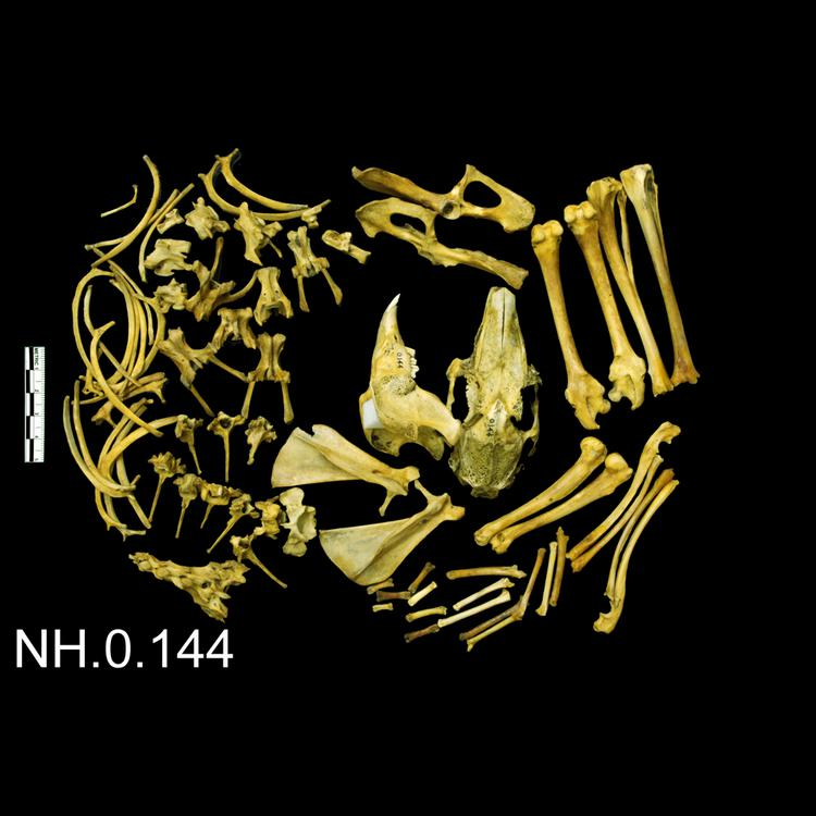 General view of object no. NH.0.144.