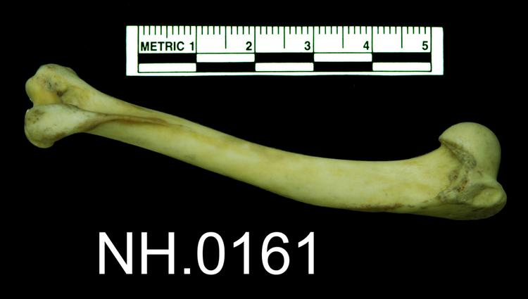 Lateral view of object no. NH.0.161.