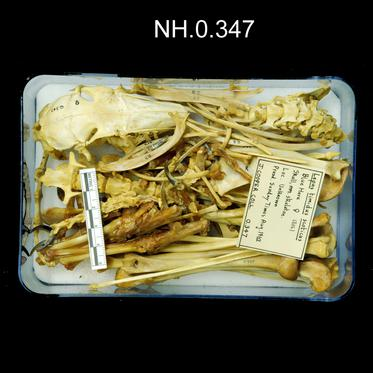 General view of object no. NH.0.347.