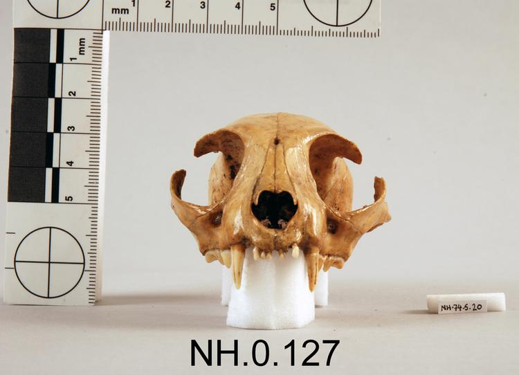 Frontal view of object no. NH.0.127.
