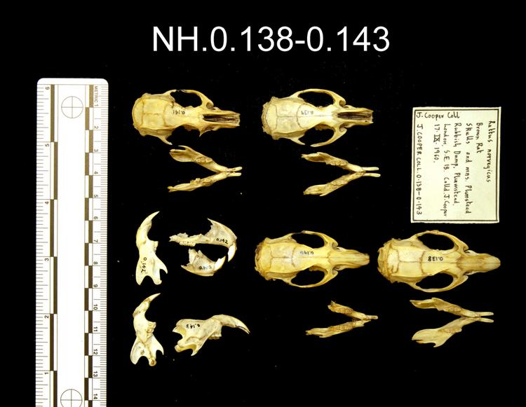 Dorsal view of object no. NH.0.139.