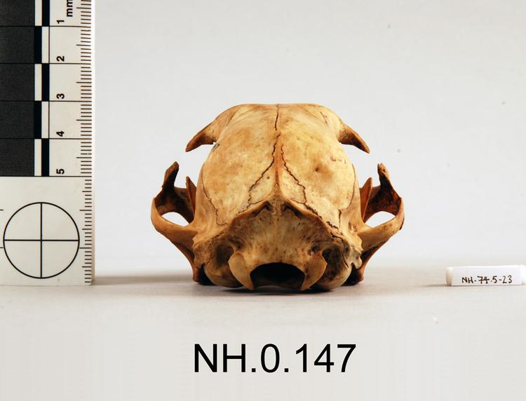 Rear view of object no. NH.0.147.