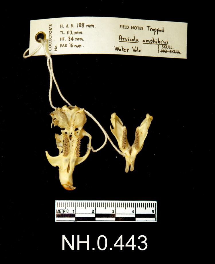 Ventral view of object no. NH.0.443.