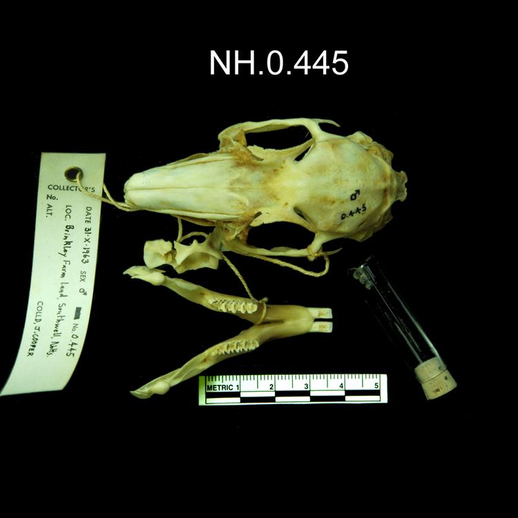 Dorsal view of object no. NH.0.445.