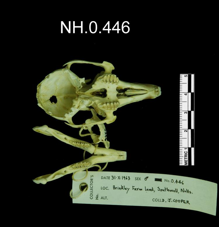 Ventral view of object no. NH.0.446.