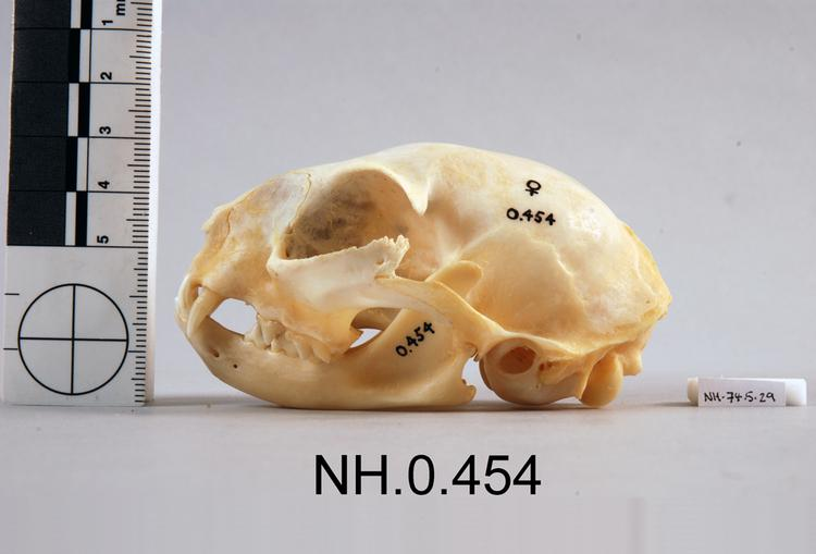 Lateral view from left of object no. NH.0.454.