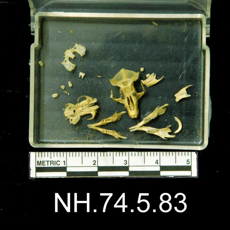 Ventral view of object no. NH.74.5.83.