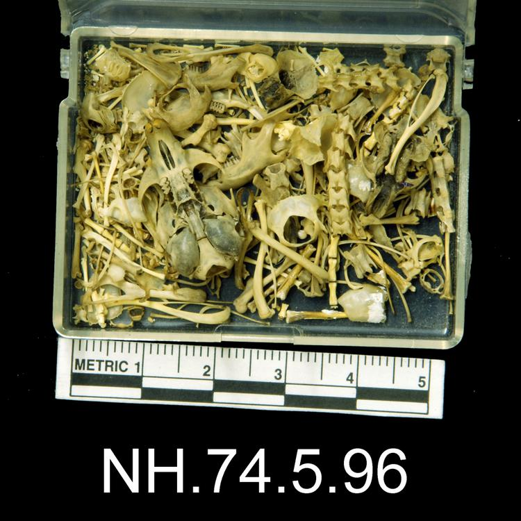 Ventral view of object no. NH.74.5.96.