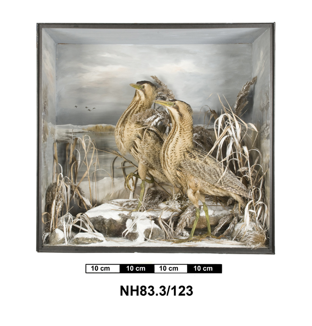 General view of object no. NH.83.3/123.