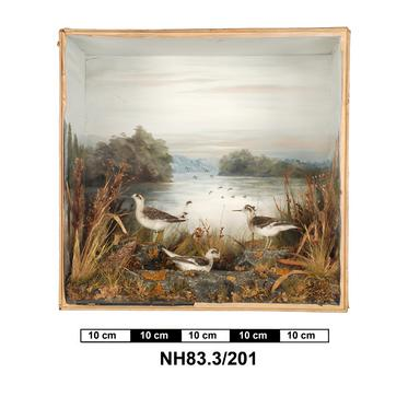 General view of object no. NH.83.3/201.