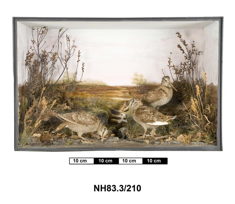 General view of object no. NH.83.3/210.