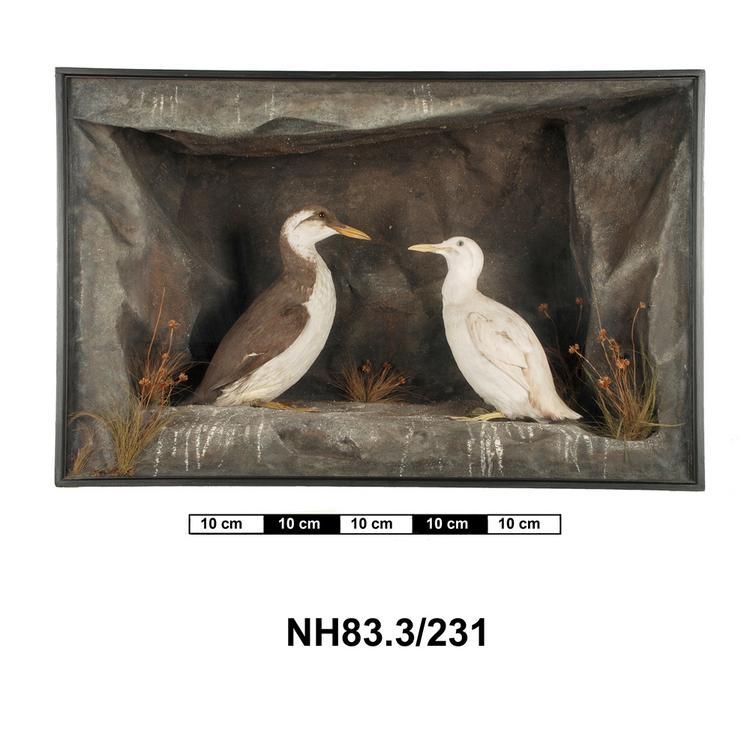 General view of object no. NH.83.3/231.