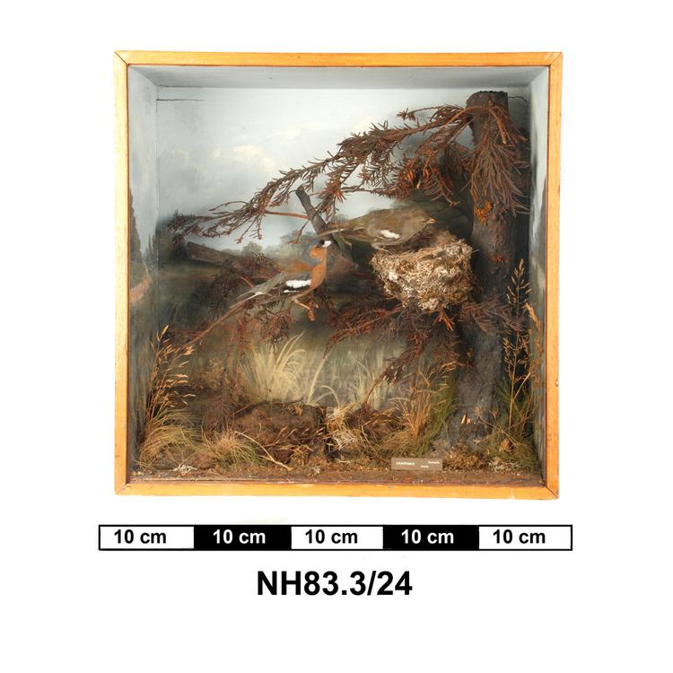General view of object no. NH.83.3/24.