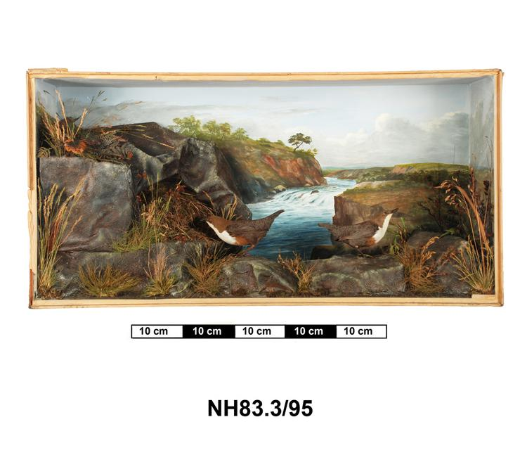 General view of object no. NH.83.3/95.