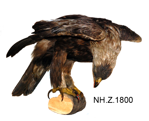 General view of object no. NH.Z.1800.