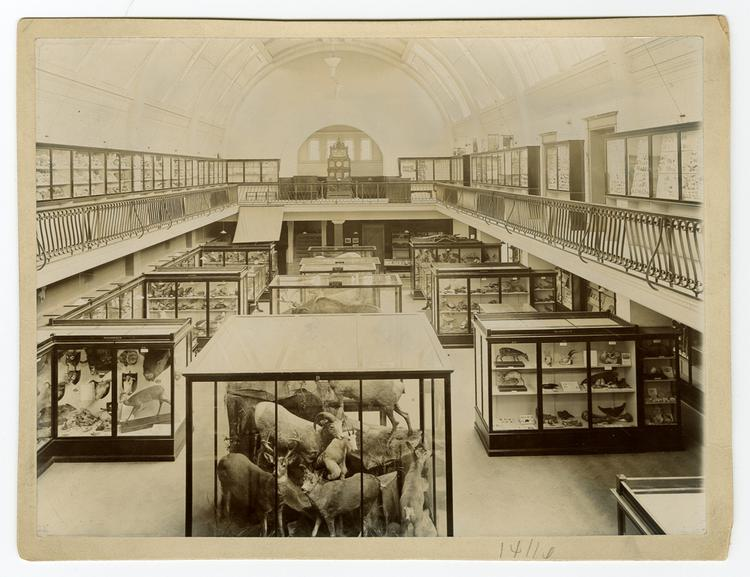 Photograph of the Natural History Gallery, circa 1902-1904