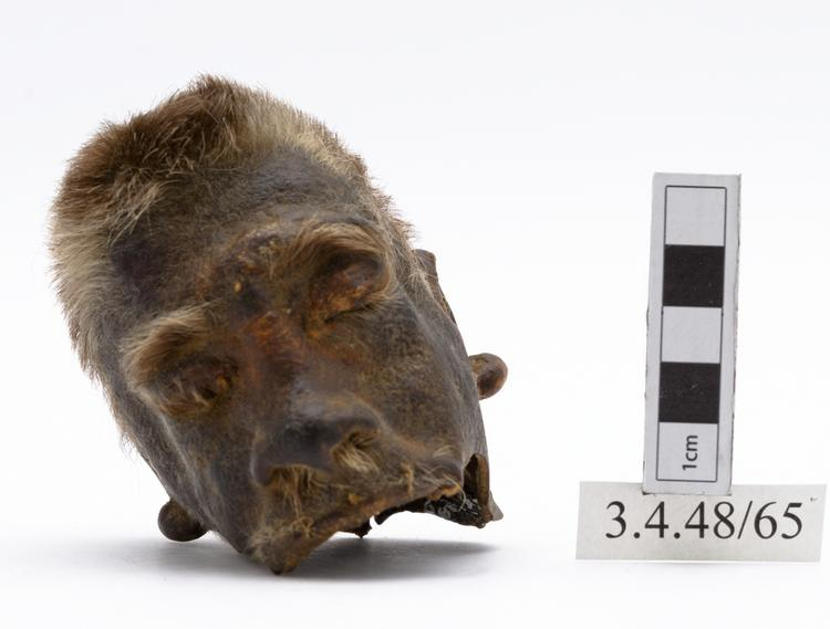 Frontal view of whole of Horniman Museum object no 3.4.48/65