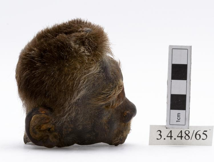 Right side view of whole of Horniman Museum object no 3.4.48/65