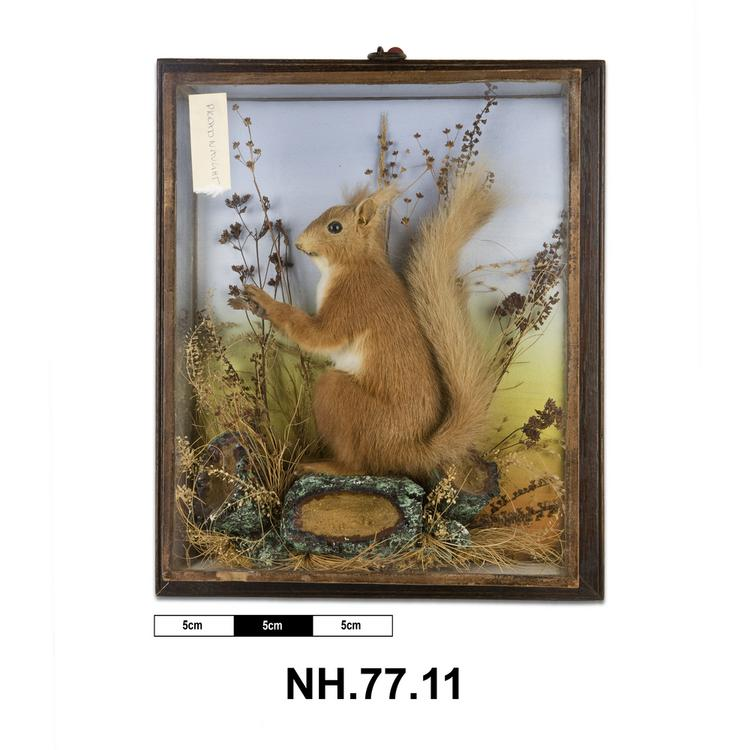 General view of whole of Horniman Museum object no NH.77.11