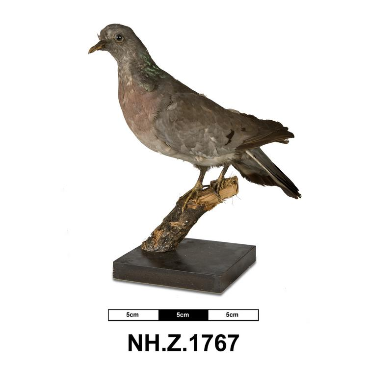 General view of whole of Horniman Museum object no NH.Z.1767