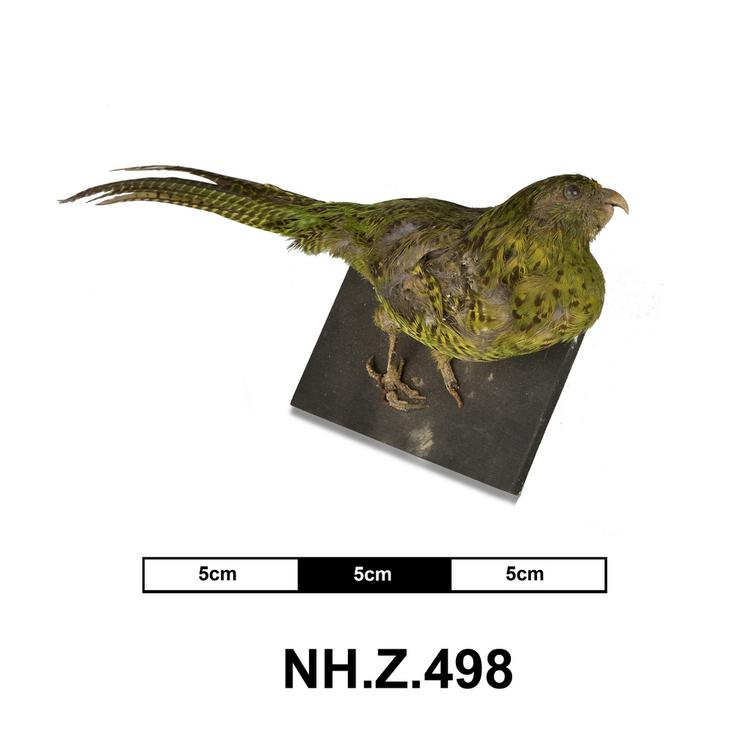 General view of whole of Horniman Museum object no NH.Z.498