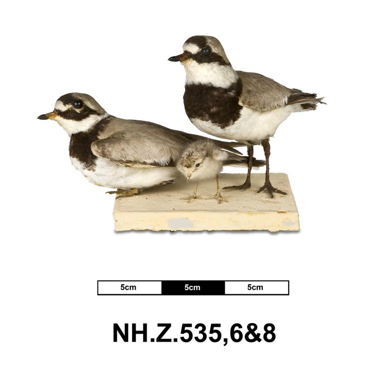 General view of whole of Horniman Museum object no NH.Z.538