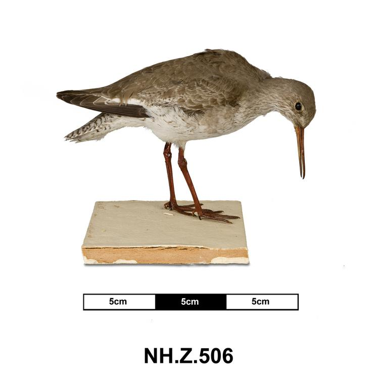 General view of whole of Horniman Museum object no NH.Z.506