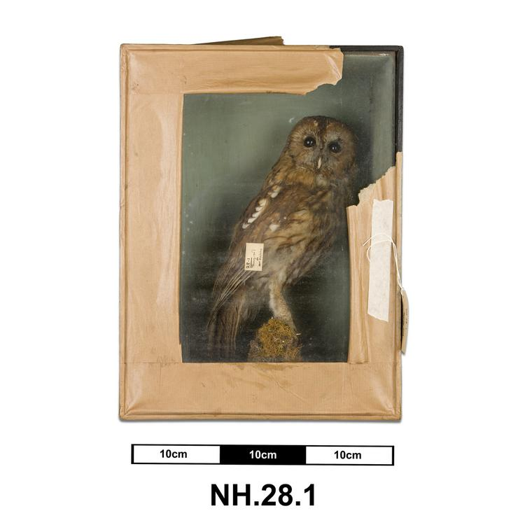 General view of whole of Horniman Museum object no NH.28.1
