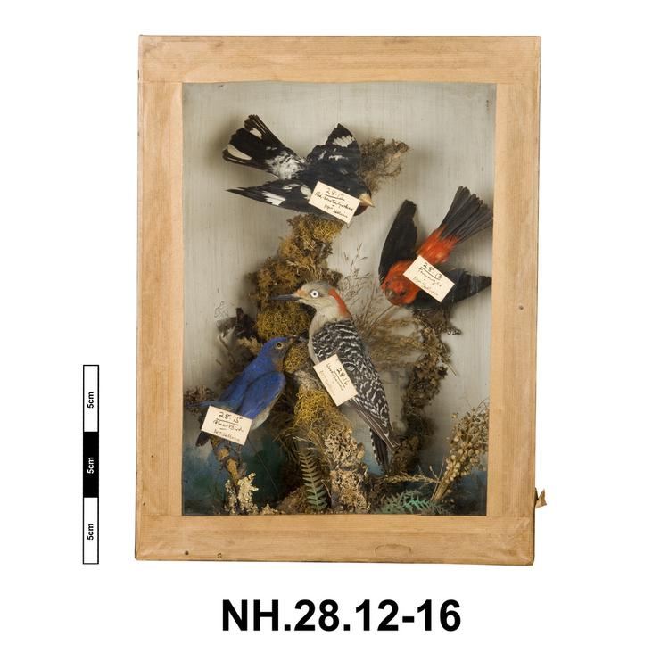 General view of whole of Horniman Museum object no NH.28.12