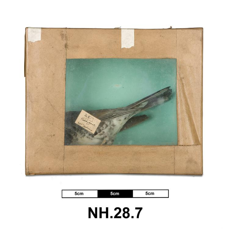 General view of whole of Horniman Museum object no NH.28.7