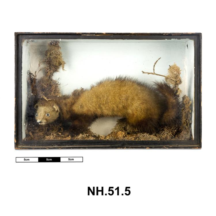 General view of whole of Horniman Museum object no NH.51.5