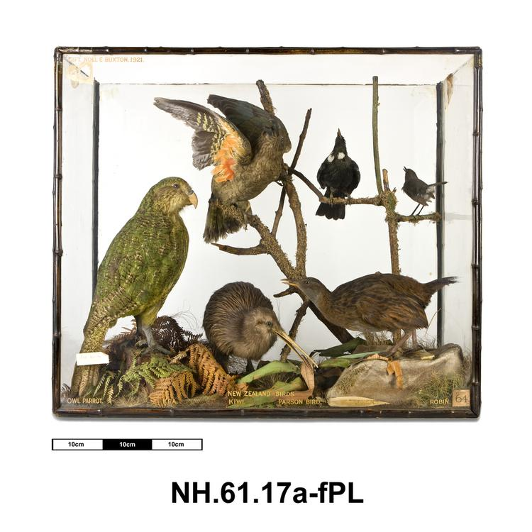 General view of whole of Horniman Museum object no NH.61.17