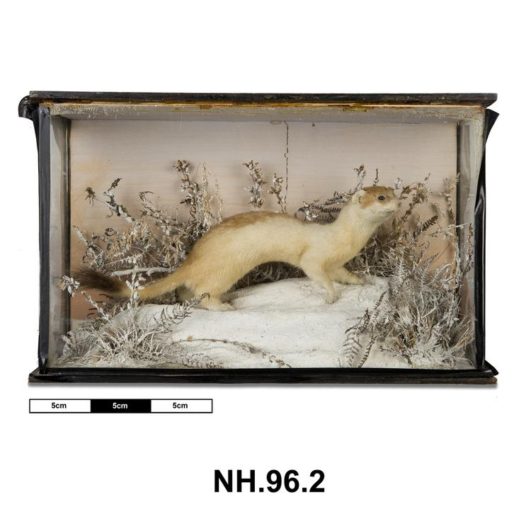 General view of whole of Horniman Museum object no NH.96.2