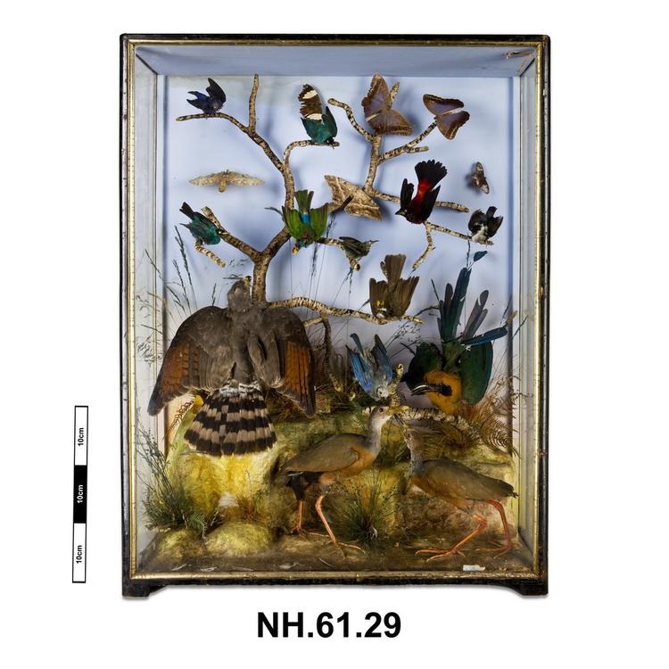 General view of whole of Horniman Museum object no NH.61.29a