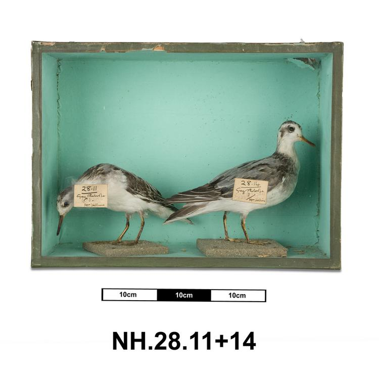 General view of whole of Horniman Museum object no NH.28.11