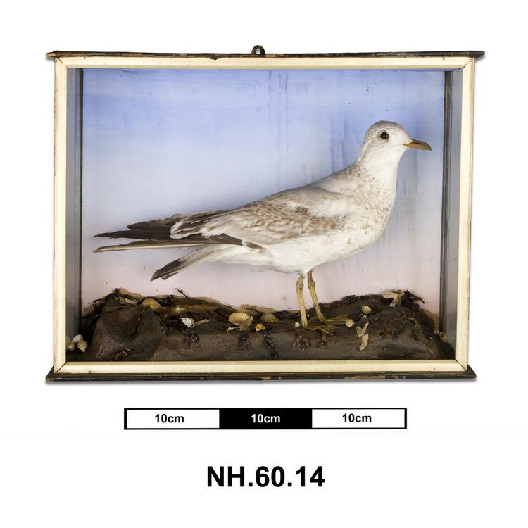 General view of whole of Horniman Museum object no NH.60.14