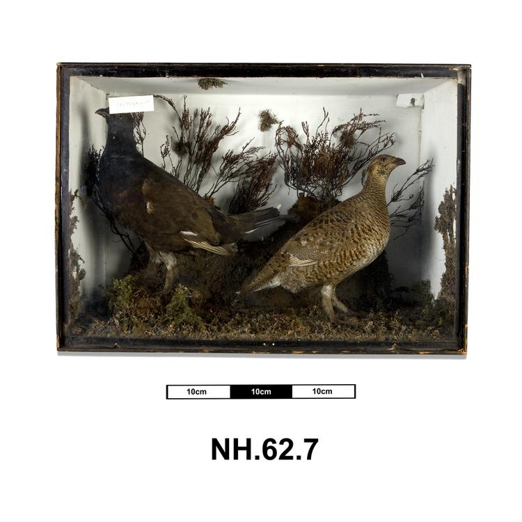 General view of whole of Horniman Museum object no NH.62.7