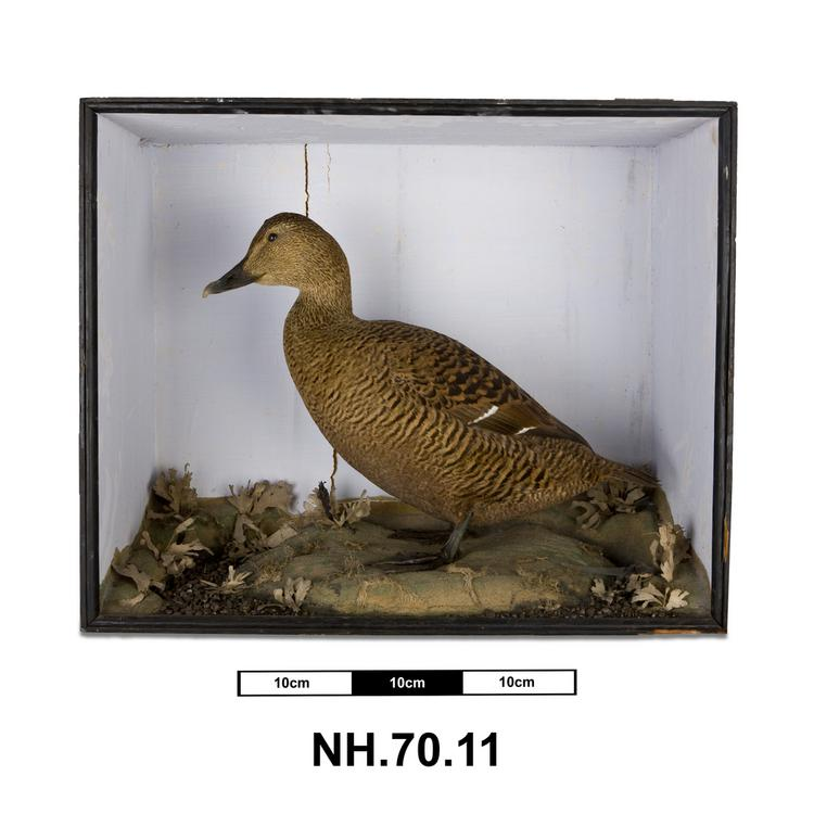 General view of whole of Horniman Museum object no NH.70.11