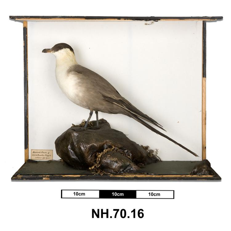 General view of whole of Horniman Museum object no NH.70.16