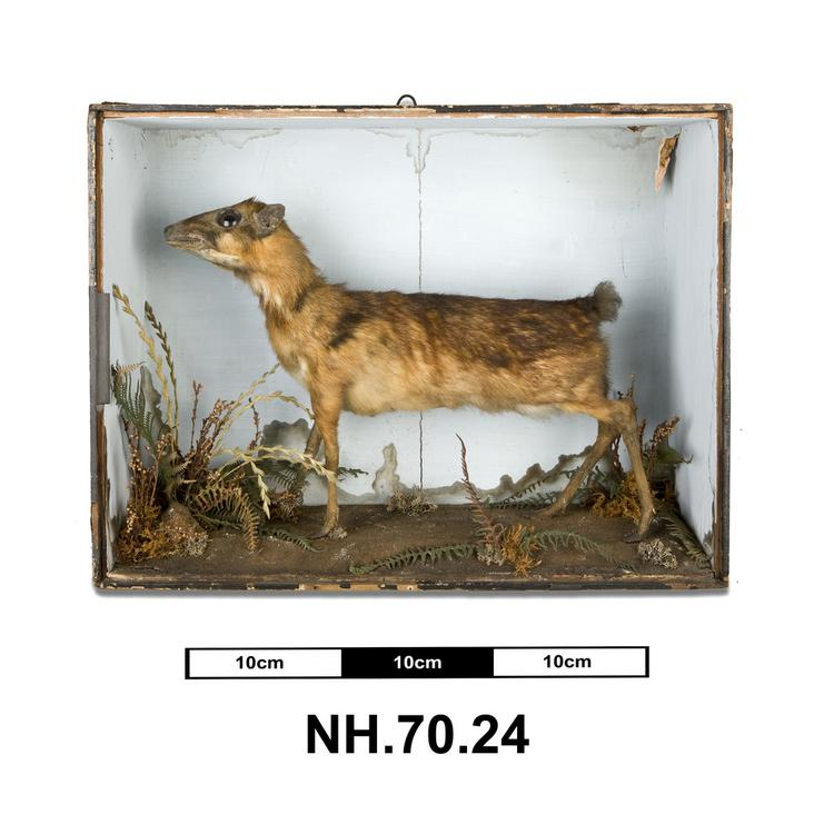 General view of whole of Horniman Museum object no NH.70.24