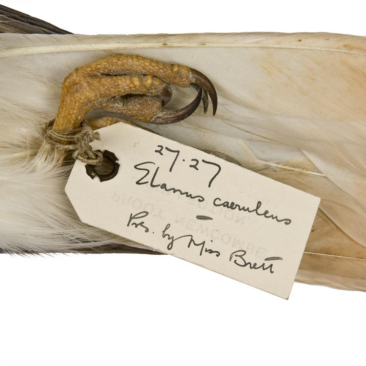 Detail view of label of Horniman Museum object no NH.27.27