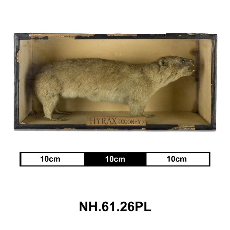 General view of whole of Horniman Museum object no NH.61.26