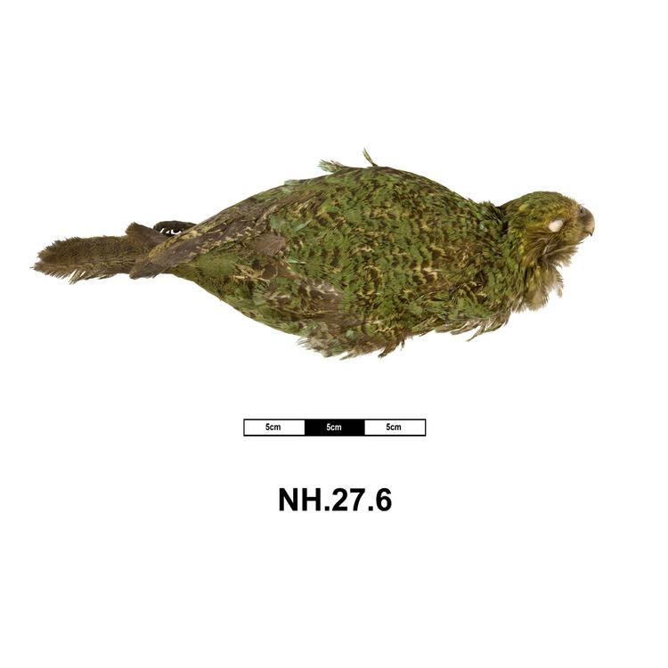 Dorsal view of whole of Horniman Museum object no NH.27.6