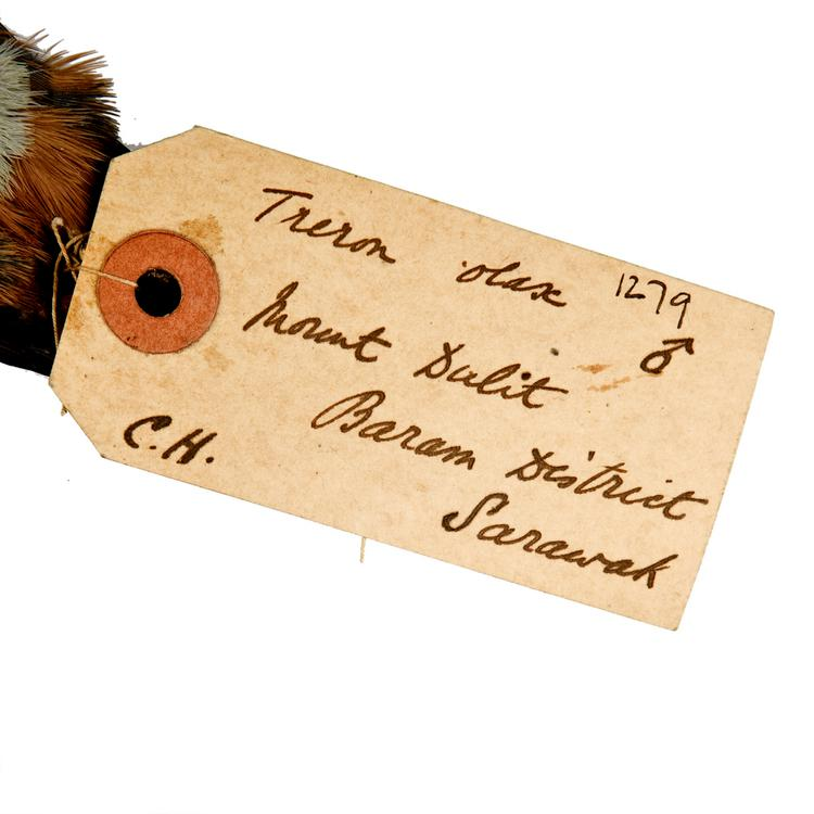 Detail view of label of Horniman Museum object no NH.Z.1279