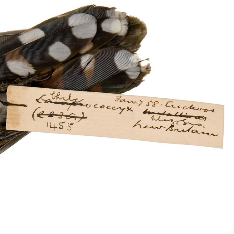 Detail view of label of Horniman Museum object no NH.Z.1455
