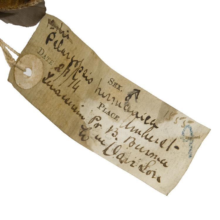 Detail view of label of Horniman Museum object no NH.Z.1555